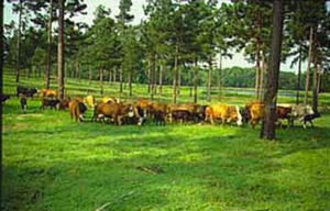 Agro-Silvo-Pastoral Systems